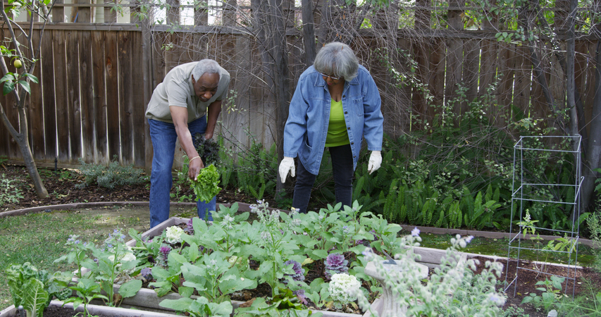 Senior black couple gardening in backyard